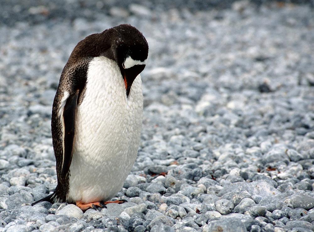 Chen Sivan Diamonds - Antarctica