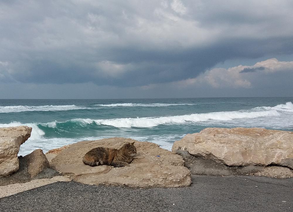 | חתול ים | חן סיון | אופנאית | Chen Sivan Diamonds |