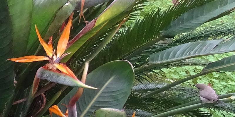 | ציפור | ציפור גן עדן | חן סיון | יהלומים | חודשלדת | Chen Sivan Diamonds |