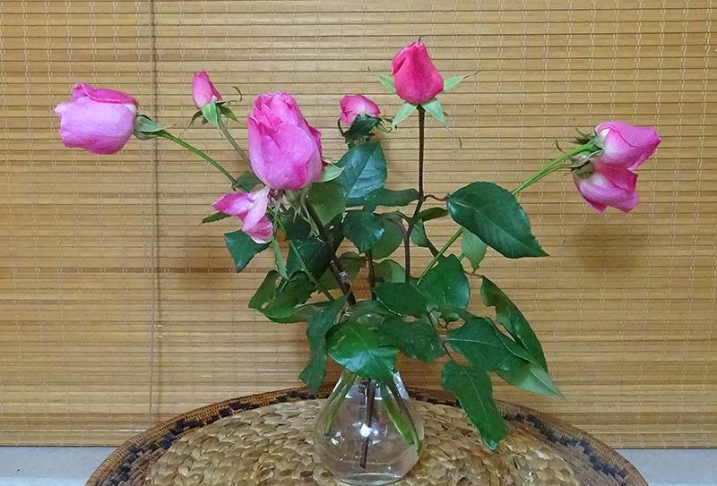 | ורדים | אזור נוחות | חן סיון | יהלומים | חודשלדת | Chen Sivan Diamonds |